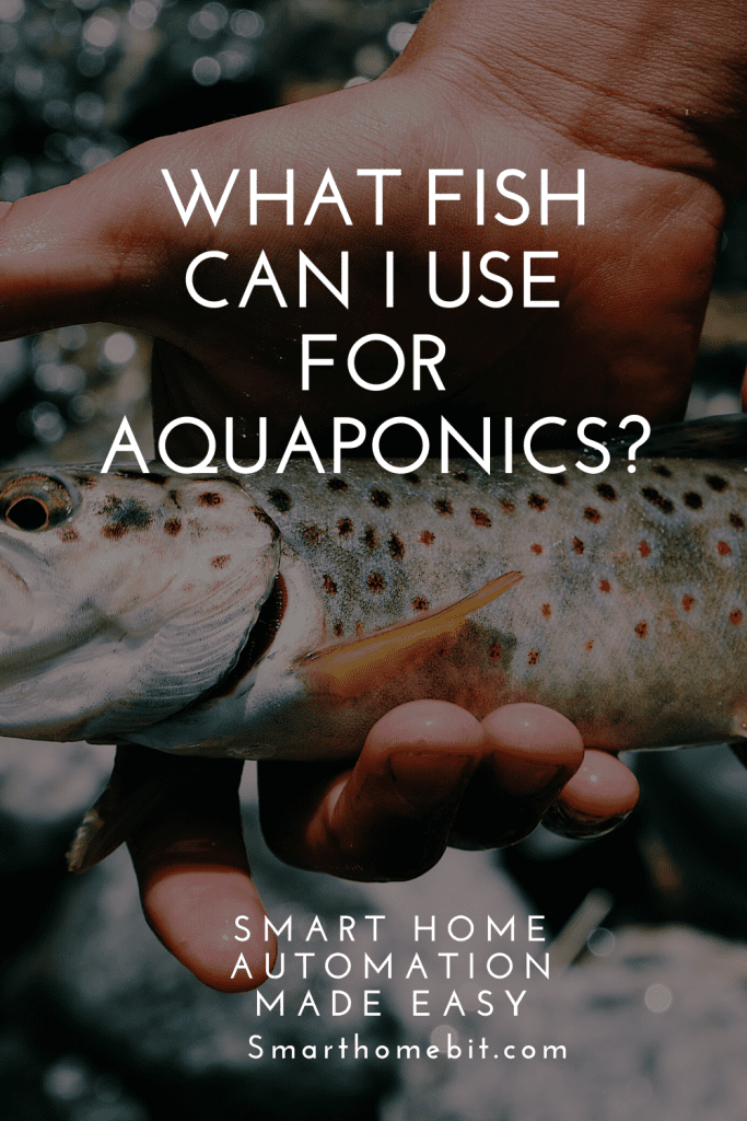 What fish can I use in aquaponics system