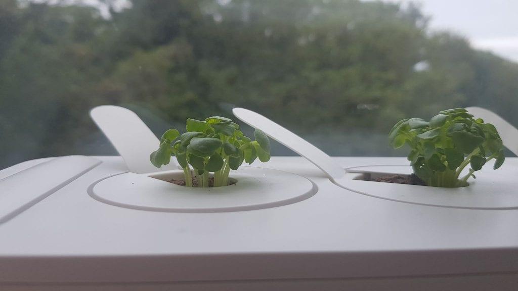 indoor herb garden kit - Click and Grow